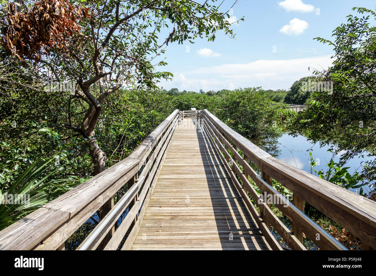 Delray Beach Florida Wakodahatchee Wetlands nature wildlife preserve park boardwalk trail protected bird habitat water reclamation project - Stock Image