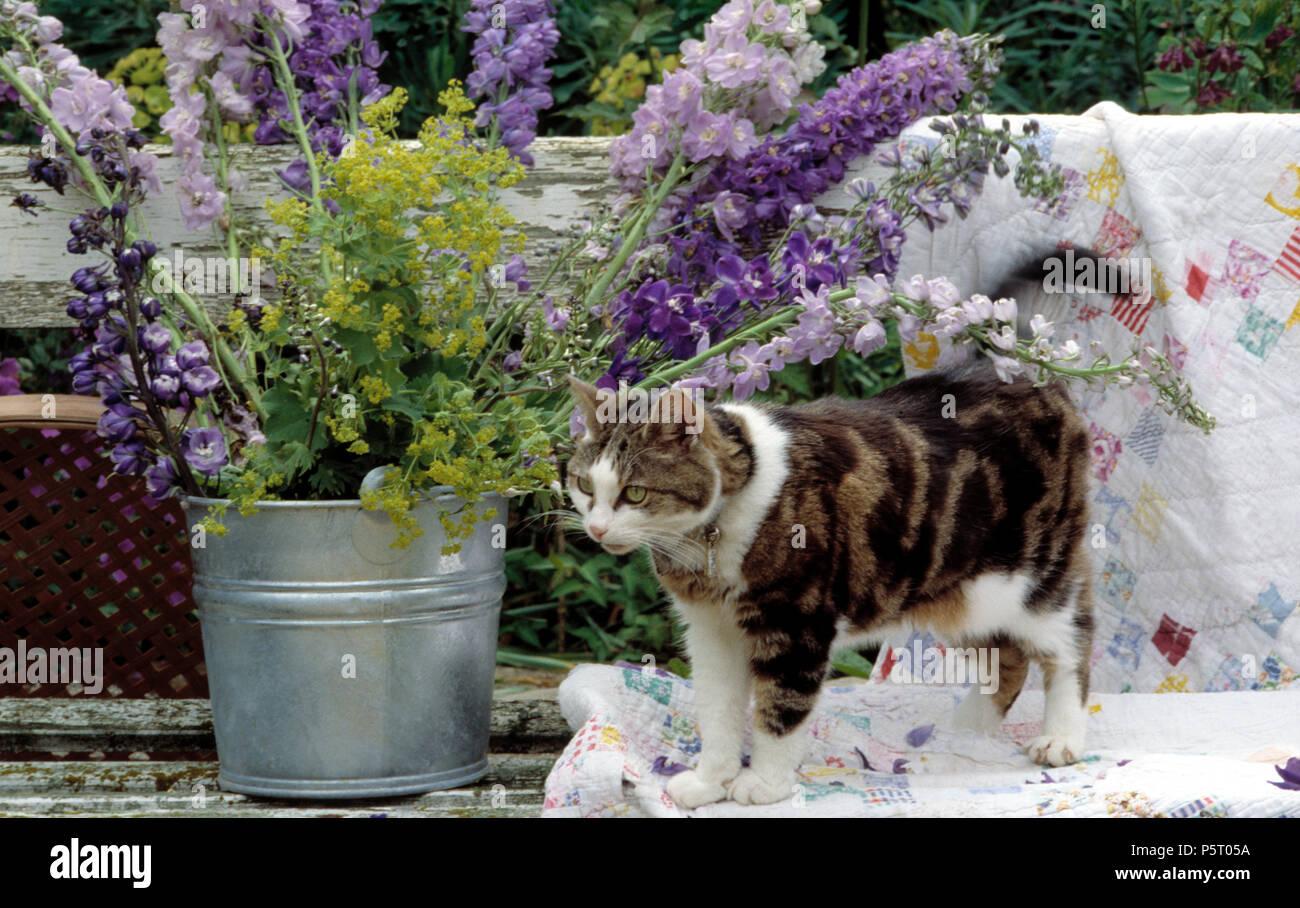 Tabby cat beside blue delphiniums in galvanized pot - Stock Image