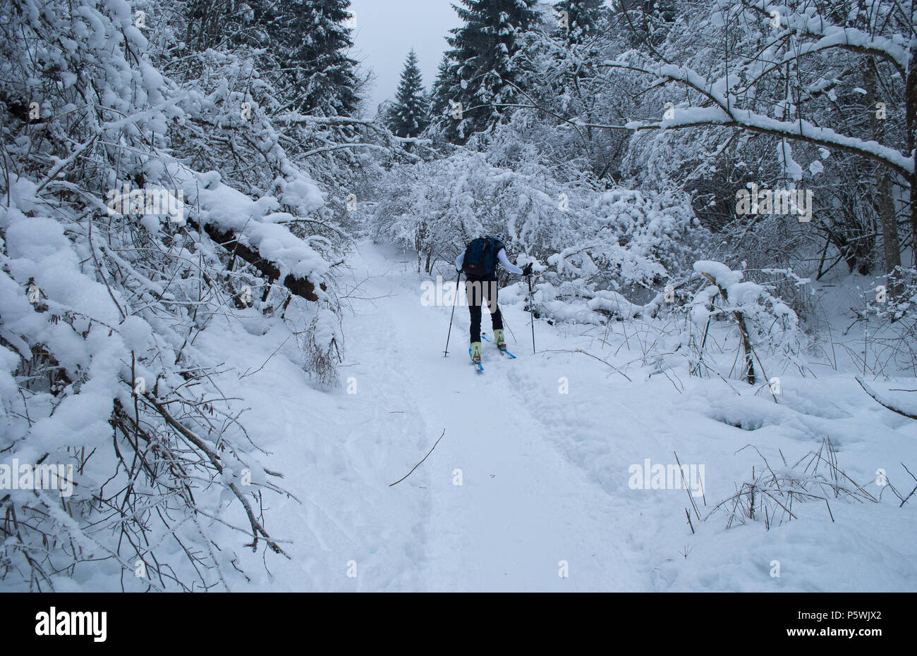Man skis in the snow-covered forest Stock Photo