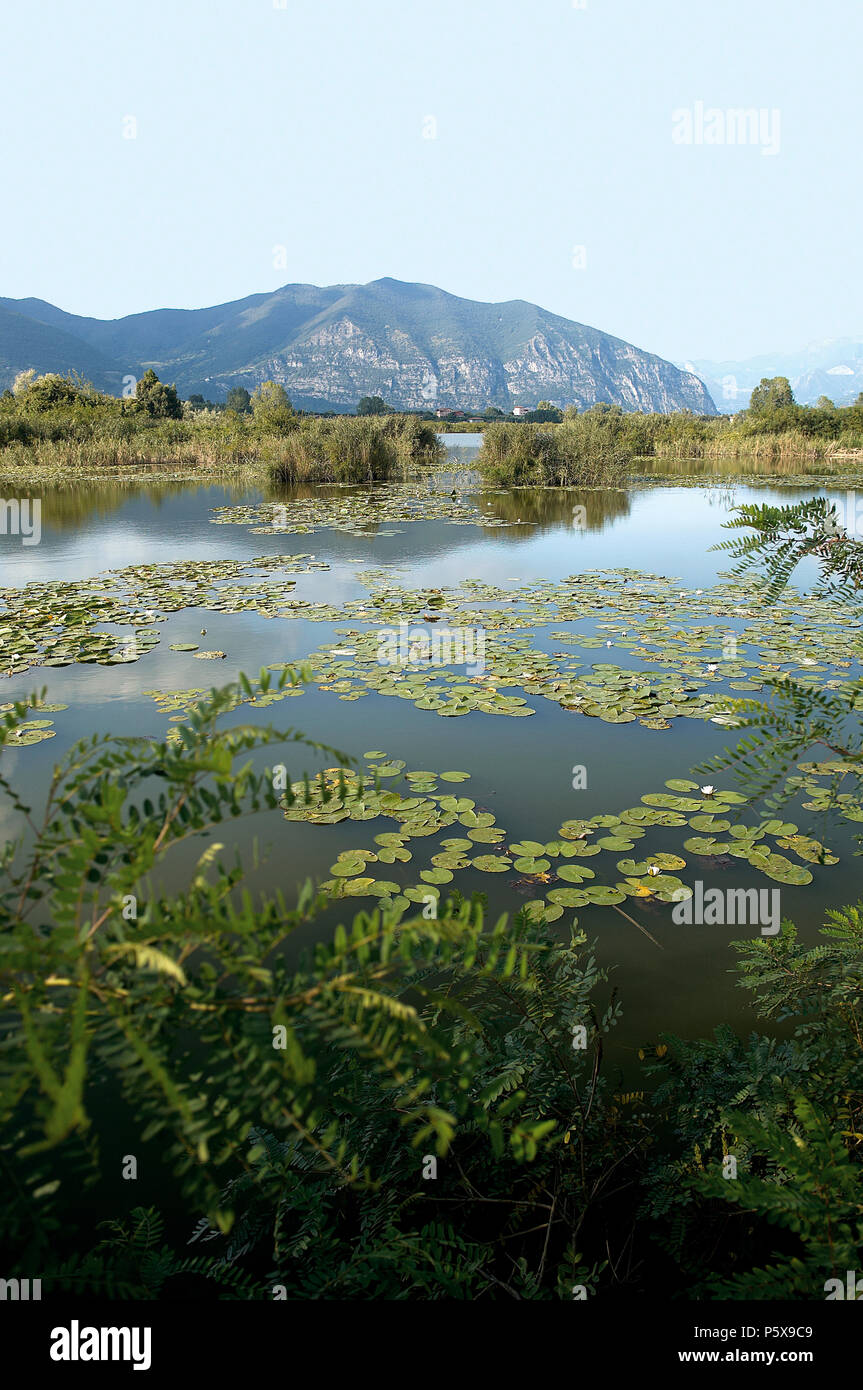 Provaglio (Bs),Franciacorta,Lombardy,Italy,National Reserve of Peat Bogs of lake Iseo - Stock Image