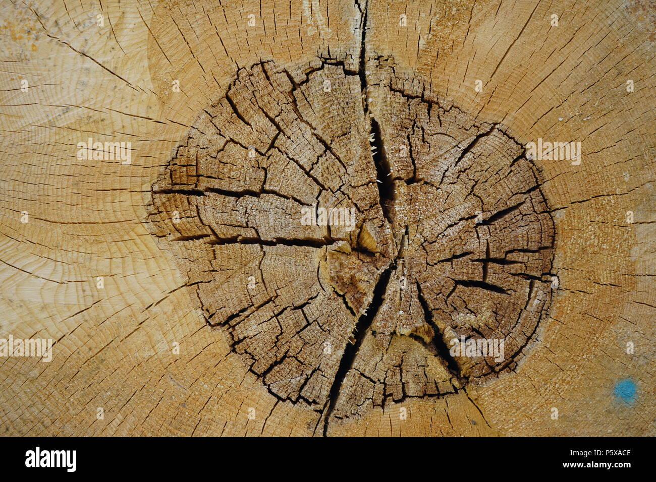 Holz Textur, Baumringe, Querschnitt eines Baumstammes, Deutschland - Stock Image