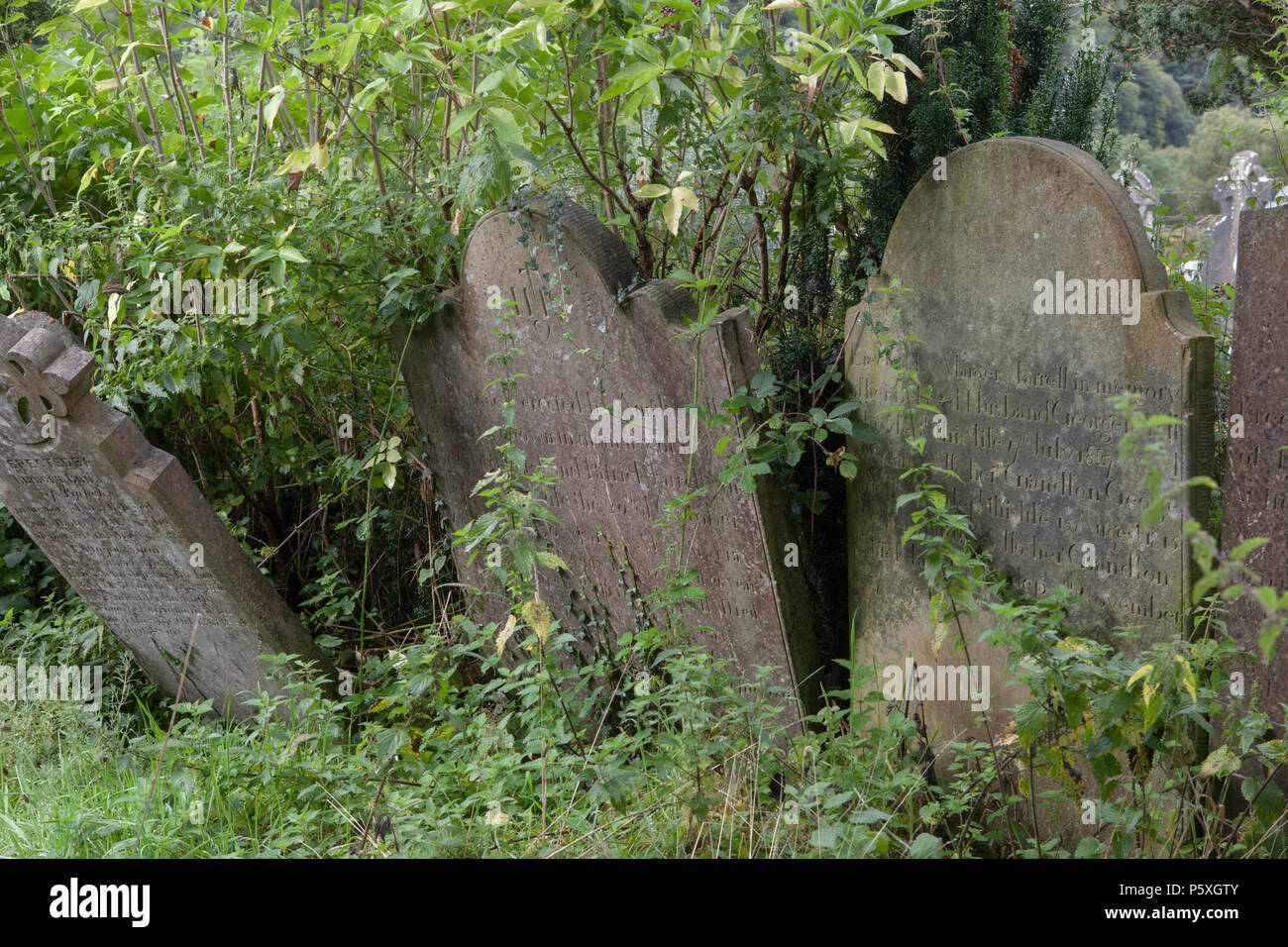 Overgrown gravestones at Glendalough Monastic Site in County Wicklow, Ireland - Stock Image