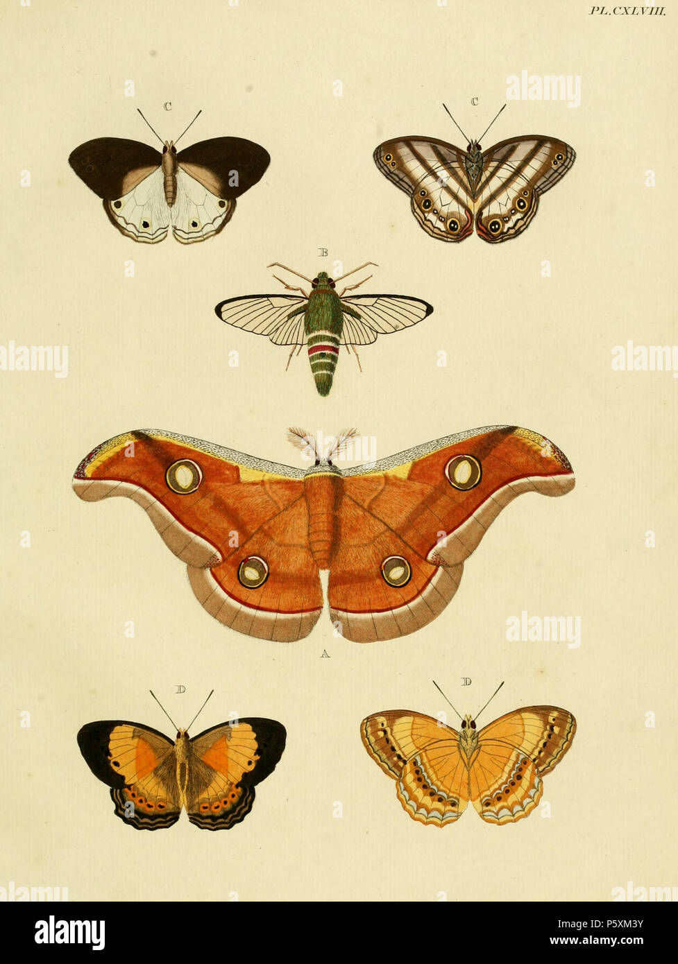 Life Pieter Stock Photos Images Page 5 Alamy Lidia Butterfly N A Plate Cxlviii Phalaena Paphia