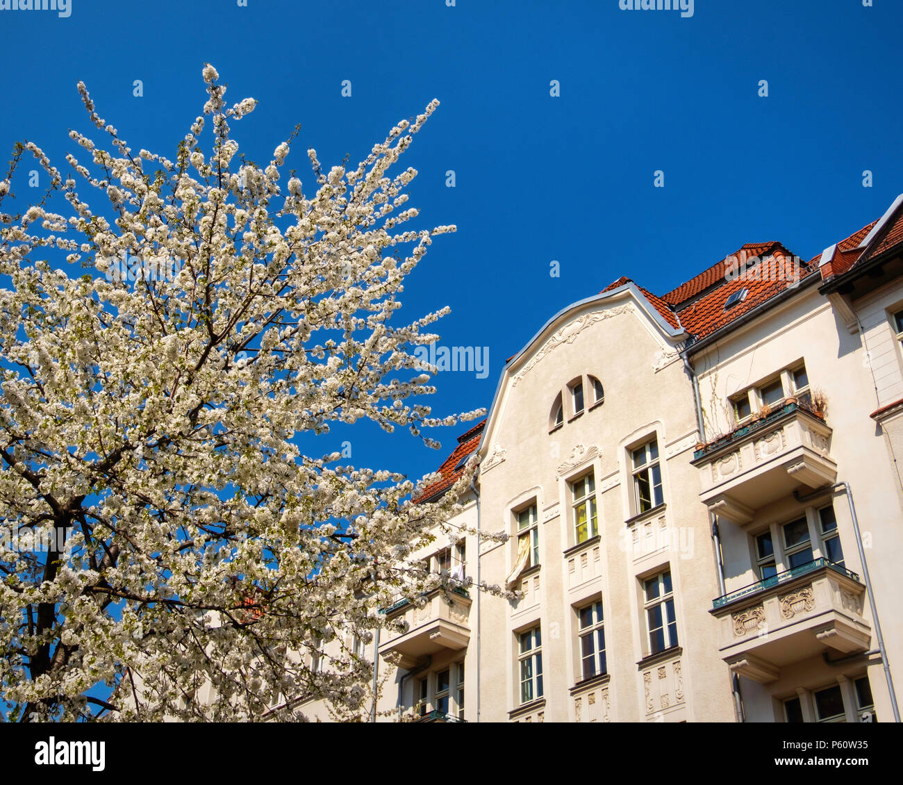 Berlin Prenzlauer Berg, Gneiststraße street view in spring with old gabled apartment buildings and blossoms on trees Stock Photo