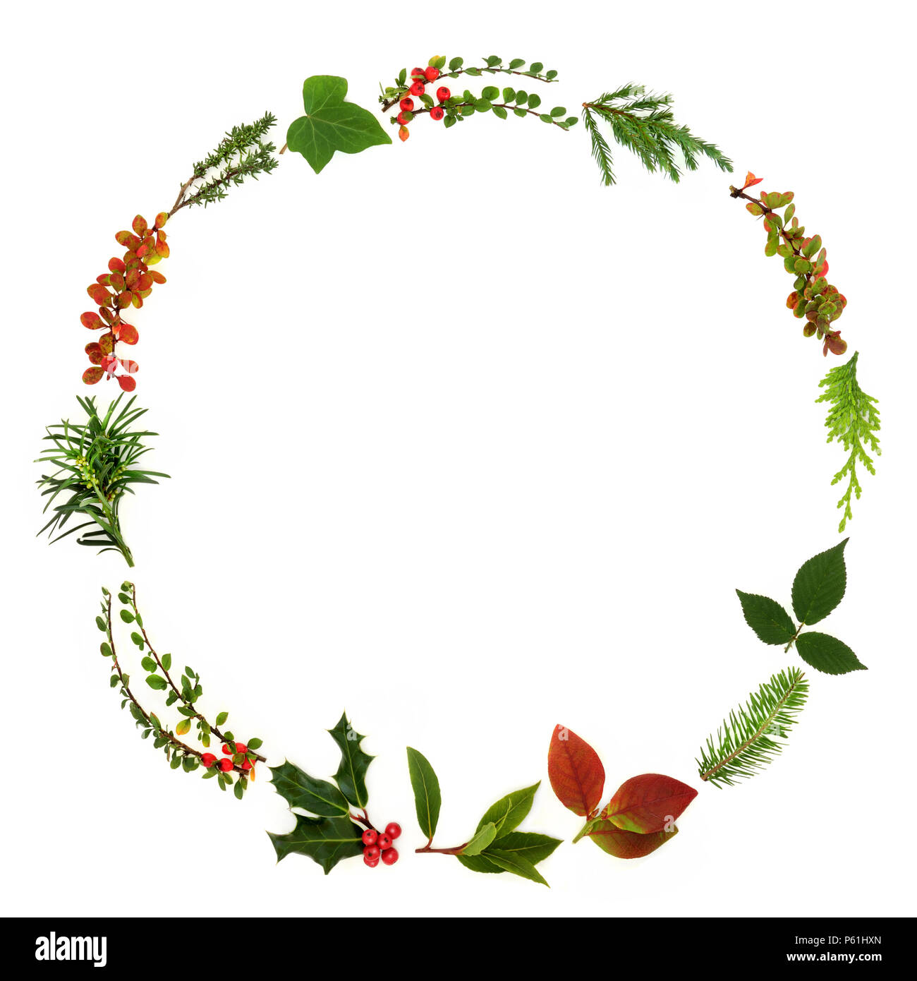 Winter and Christmas minimalist wreath garland with natural leaf sprigs, berries and plants on white background. Traditional christmas greeting card f - Stock Image