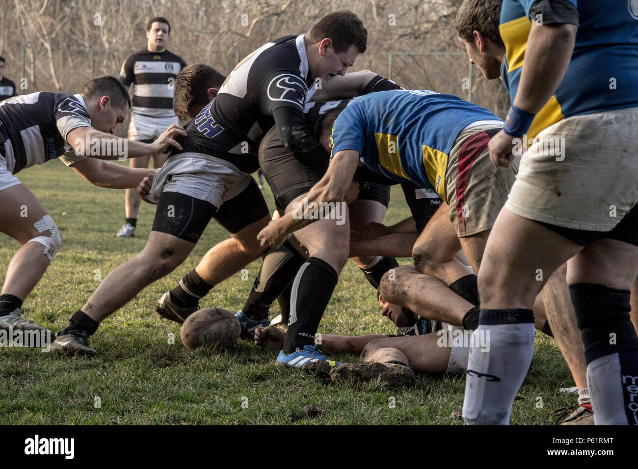 BELGRADE, SERBIA - MARCH 1, 2015:  Rugby Scrum during a training of the Partizan Rugby team with white caucasian men confronting and packing in group  - Stock Image