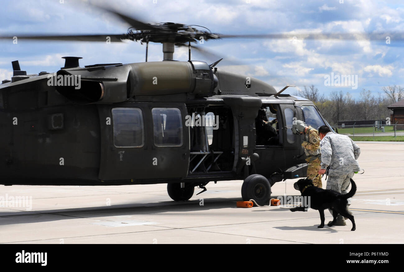U.S. Air Force Staff Sgt. Ki Seung Nam, a 509th Security Forces Squadron military working dog (MWD) handler, runs toward a UH-60 Black Hawk helicopter with MWD Buda for an orientation flight at Whiteman Air Force Base, Mo., April 1, 2016. The 1-135th Attack Reconnaissance Battalion trains with the 509th Security Forces Squadron's MWDs and their handlers for search and rescue or other operations that would require the MWDs to be air lifted. - Stock Image