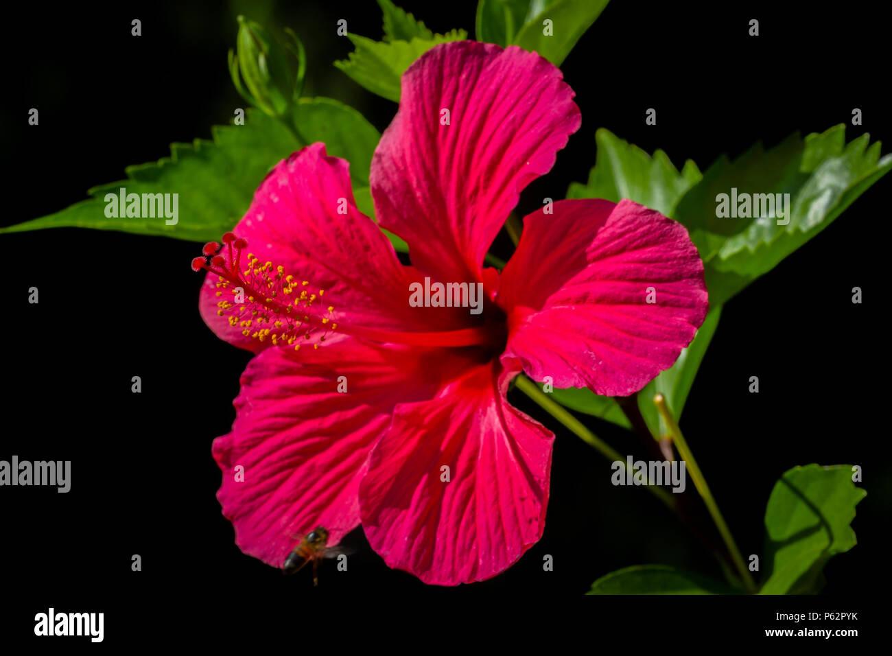 Hawaiian Tropical Flower Arrangement Stock Photos Hawaiian