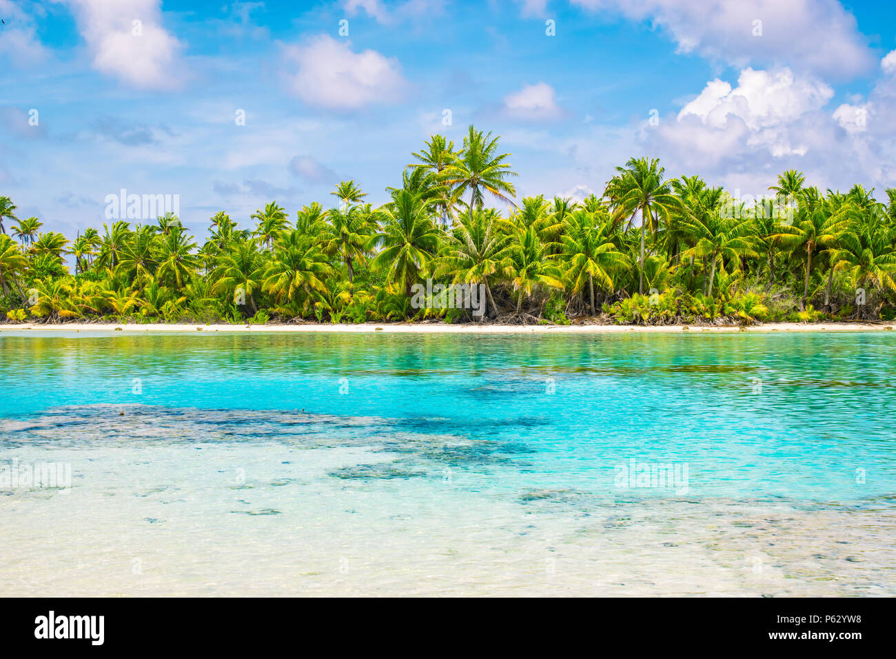 Tropical palm trees and lagoon of Fakarava, French Polynesia. Summer vacation concept. - Stock Image