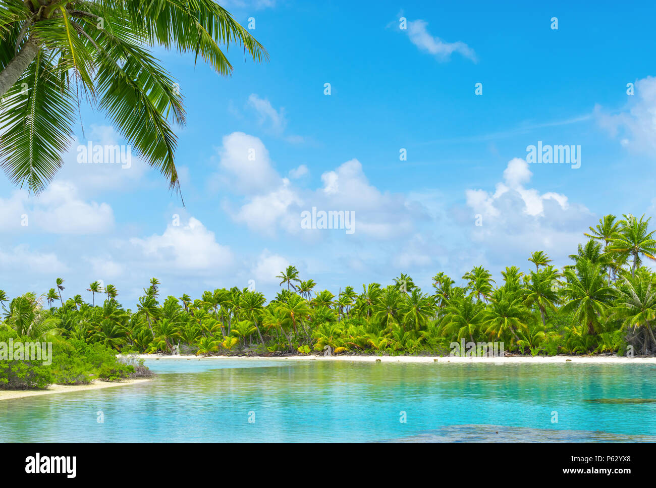 Tropical lagoon scenery with coconut palm trees and blue sky. Exotic summer destination. Stock Photo
