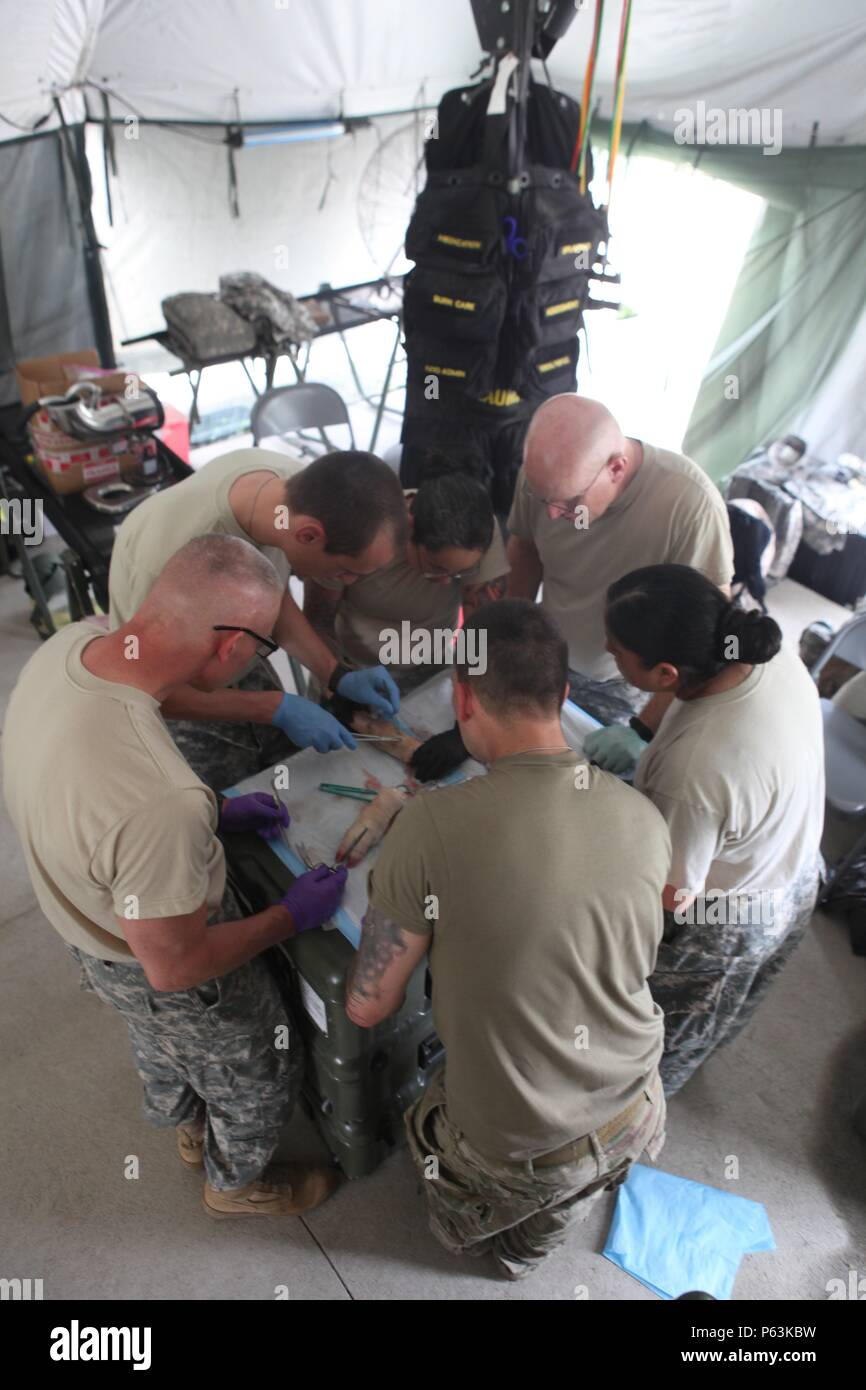 U.S. Army Soldiers practice stitching wounds on pigs feet in preparation of real life injuries at Coatepeque, Guatemala, April 30,2016. Task Force Red Wolf and Army South conducts Humanitarian Civil Assistance Training to include tactical level construction projects and medical readiness training exercises providing medical access and building schools in Guatemala with the Guatemalan Government and non government agencies from 05Mar16 to 18JUN16 in order to improve the mission readiness of US Forces and to provide a lasting benefit to the people to Guatemala. (U.S. Army photo by Spc. Glenaj Wa - Stock Image