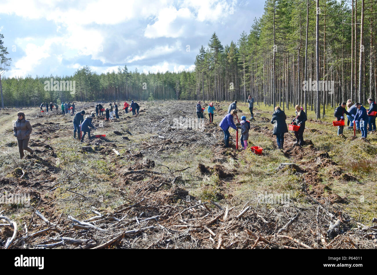 Volunteers spread across a field to plant trees during a tree planting ceremony in Kuusalu, Estonia, April 22, 2016. (Photo by U.S. Army Staff Sgt. Steven M. Colvin/Released) - Stock Image
