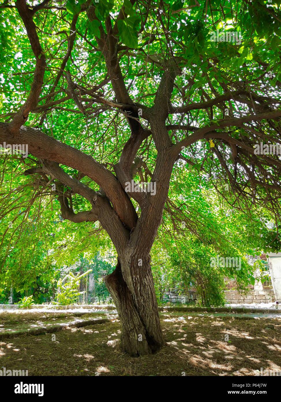 Mulberry Garden Stock Photos & Mulberry Garden Stock Images - Alamy