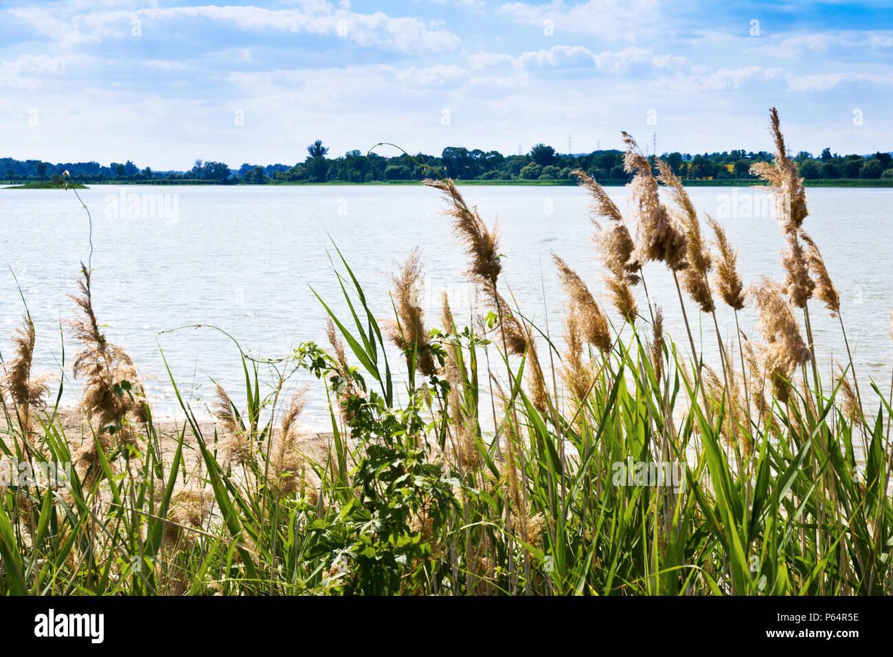 Mlýnský rybník, národní přírodní rezervace Lednické rybníky, Lednice (UNESCO), LVA Lednicko-valtický areál, Jihomoravský kraj, Ceska republika / Mill  Stock Photo