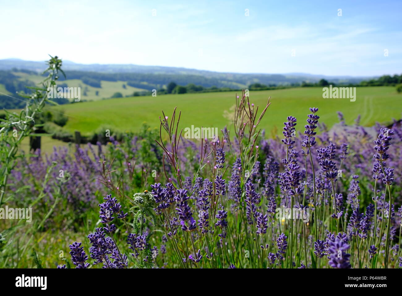 Welsh landscape in summer day  (near Ruthin, Wales) - Stock Image