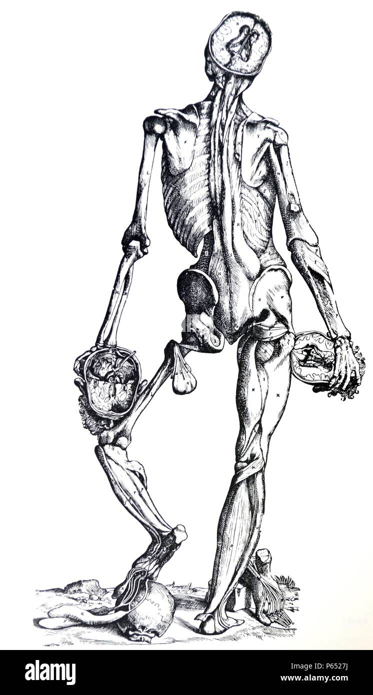 The Plates From The Epitome Of The De Humani Corporis Fabrica By