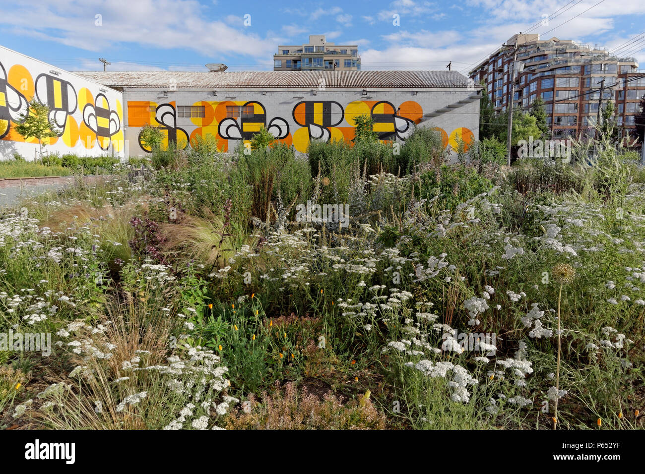 Fifth and Pine pop-up park and pollinator project with wildflower meadow bee habitat, Vancouver, BC, Canada - Stock Image