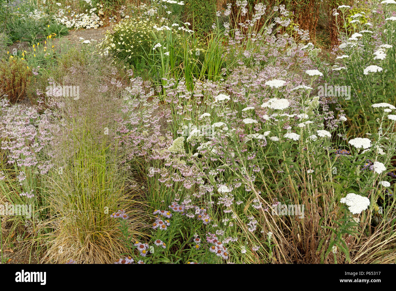 Wildflower meadow in Fifth and Pine pop-up park and pollinator project bee habitat, Vancouver, BC, Canada - Stock Image