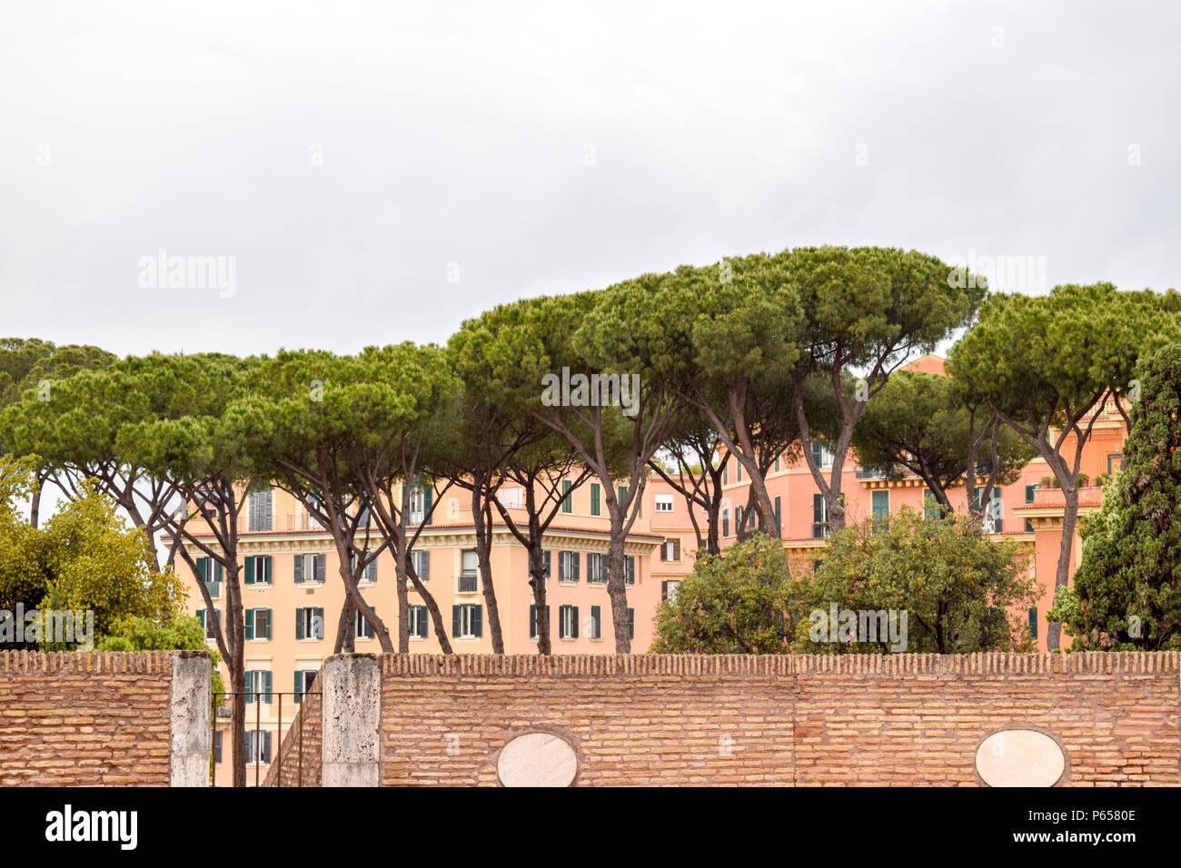 Italian Stone Pine - Landscape, Rome Italy - Stock Image