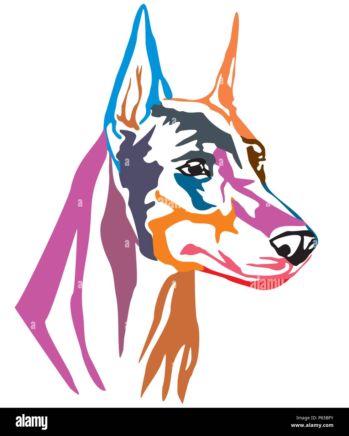 Colorful decorative portrait of Dog Dobermann, vector illustration in different colors isolated on white background. Image for design and tattoo. - Stock Image