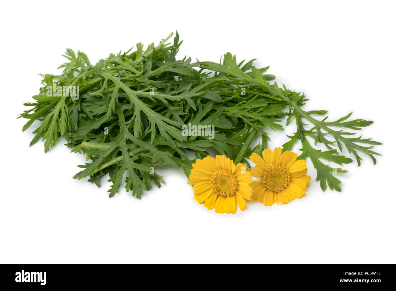 Fresh raw Tong ho spinach and yellow flowers  isolated on white background - Stock Image