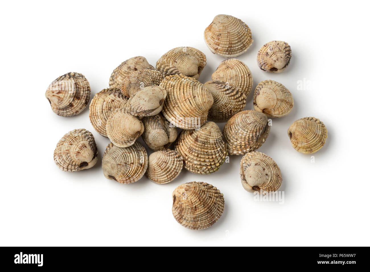 Heap of fresh raw warty venus clams isolated on white background - Stock Image