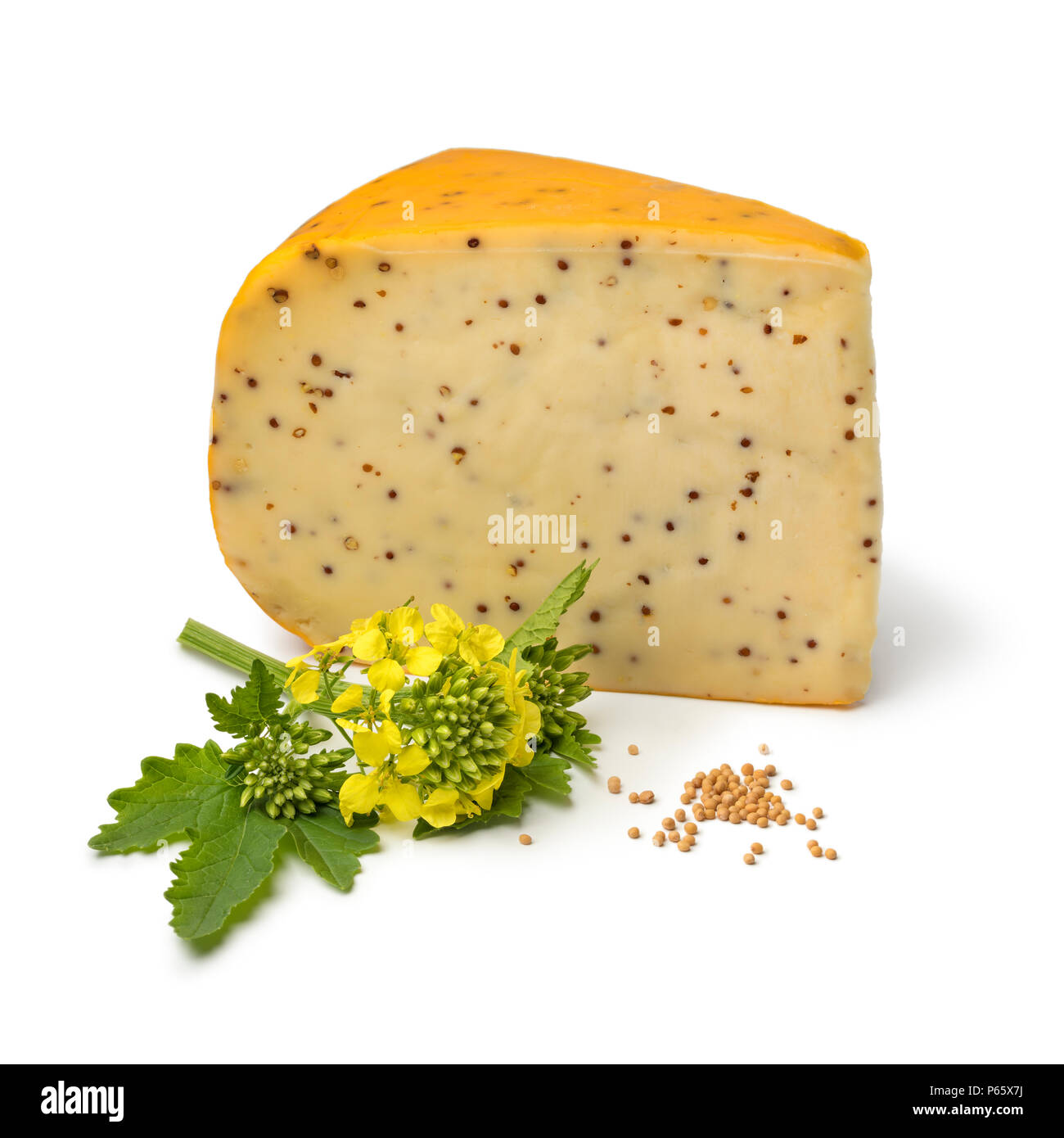 Dutch young mustard cheese with flower and seeds isolated on white background - Stock Image