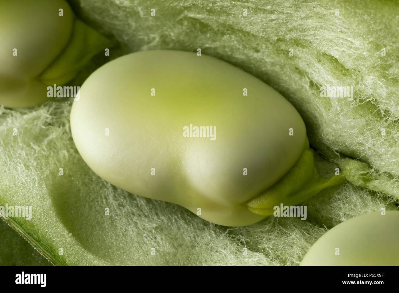 Fresh raw broad bean inside the pod close up full frame - Stock Image