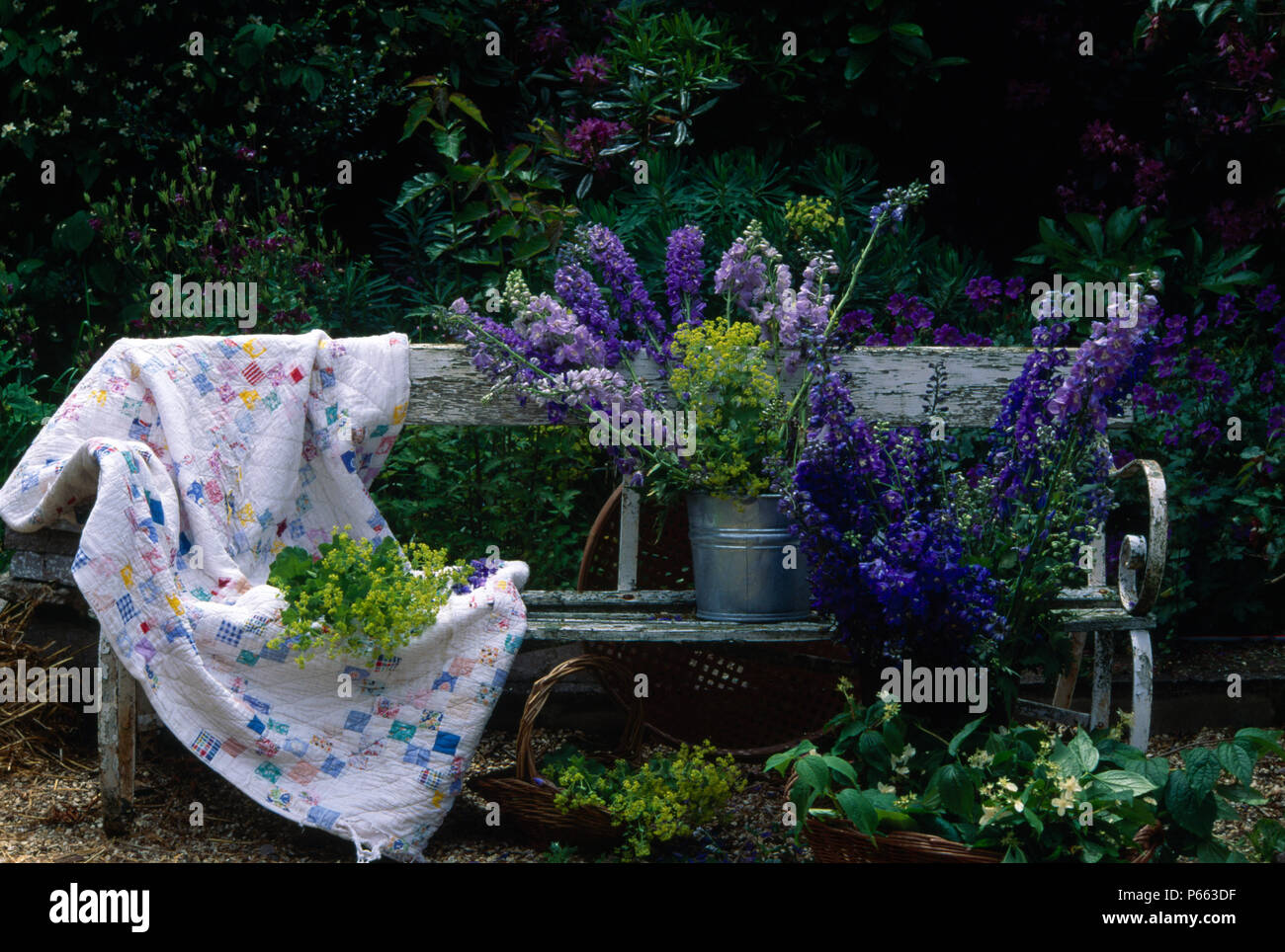 Delphiniums Uk Garden Stock Photos Amp Delphiniums Uk Garden