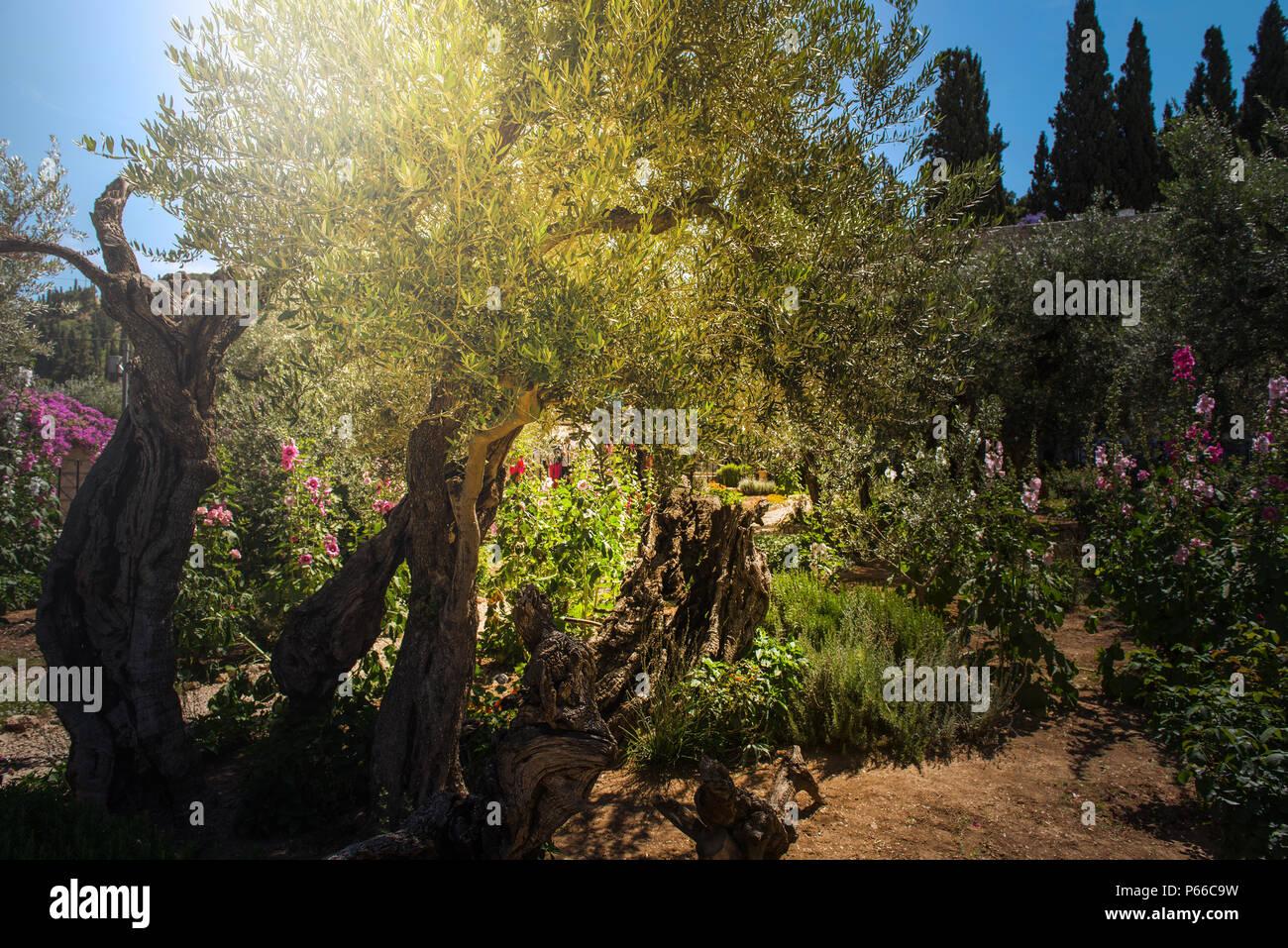 Garden Garten Gethsemane Bibel