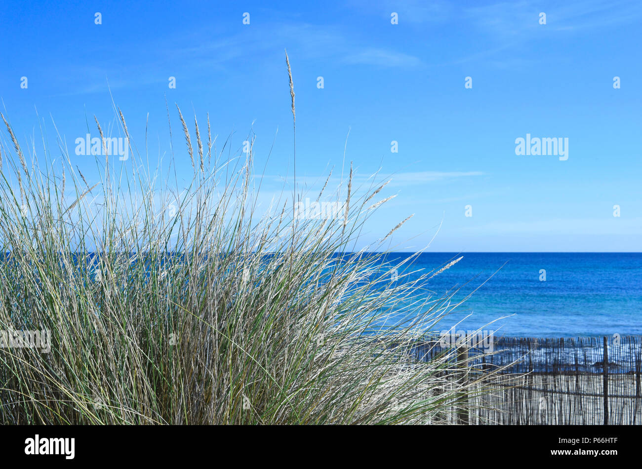 reeds at the beach with view to the sea beach background