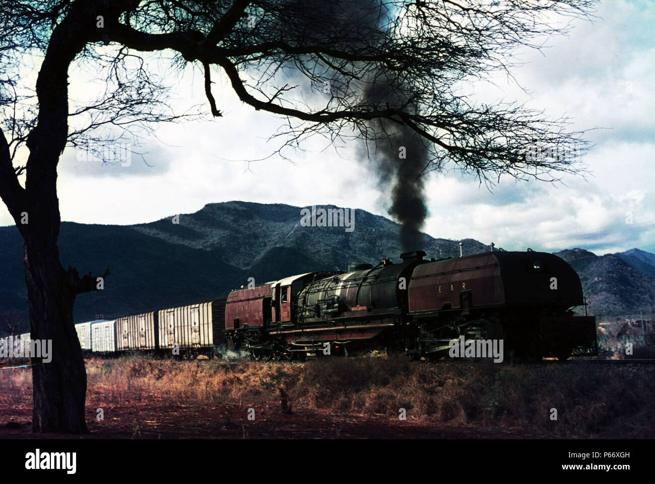 Big game at Voi. One of the world's largest steam engines skirts the edge of the Tsavo Game Reserve in 1973, Built by Beyer Peacock in 1955, The engin - Stock Image
