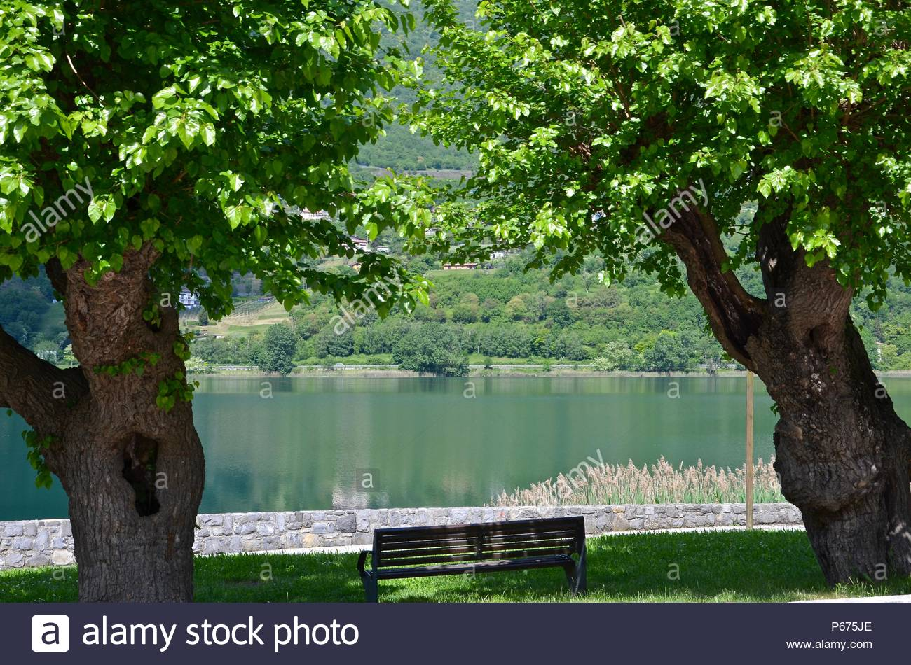 View between two trees towards Lago d'Iseo in Lombardy, Italy, Lake, park bench, spring, daylight, sunny, romantic, idyllic, Italian lifestyle - Stock Image