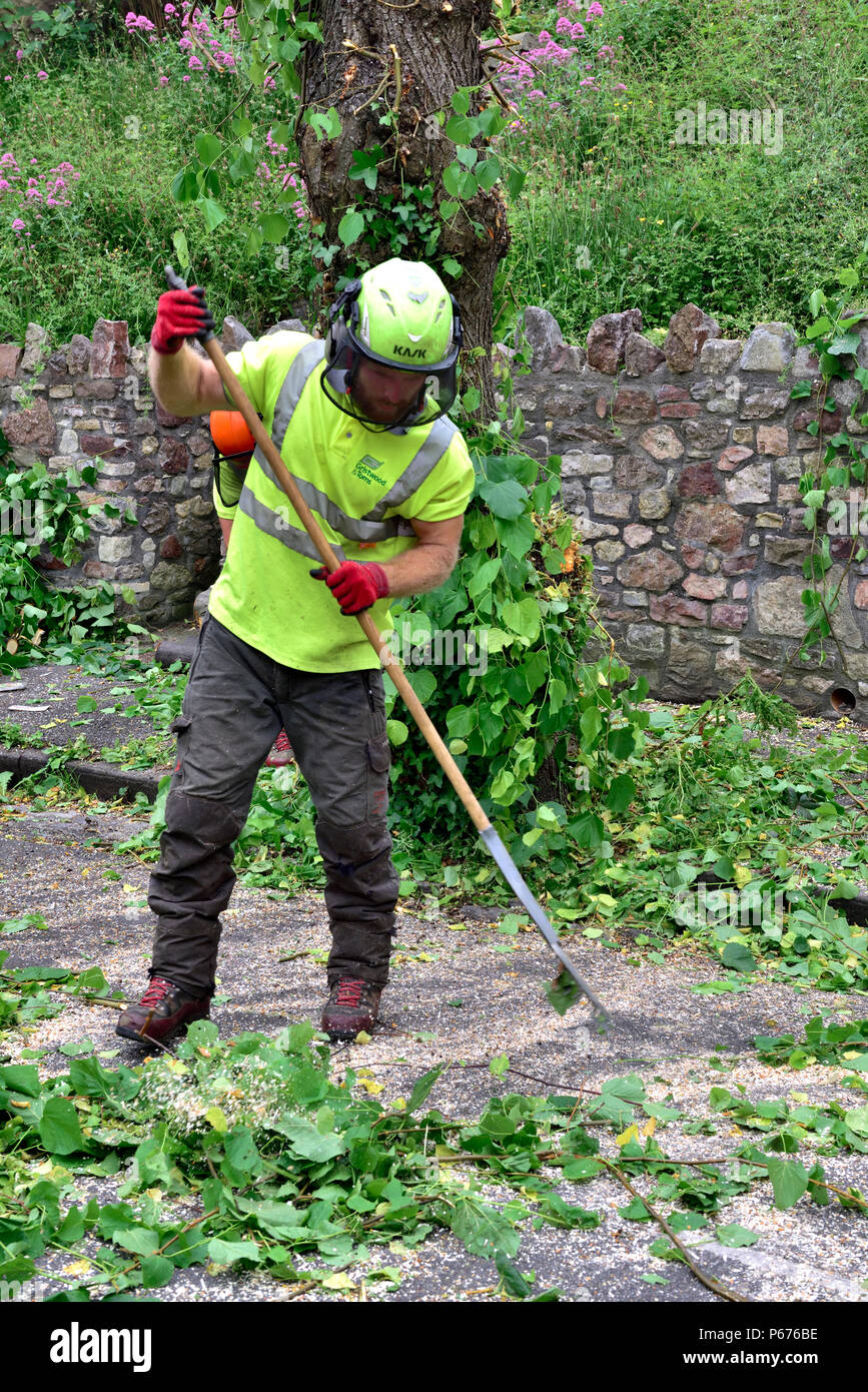 Man, tree surgeon, racking up leaves and tree branches when tidying up after tree pruning - Stock Image