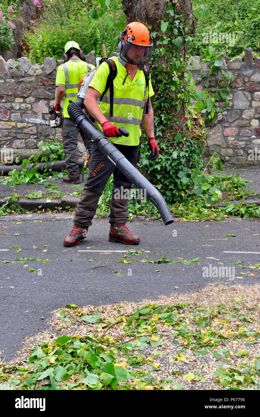Man, tree surgeon, using leaf blower when tidying up after tree pruning - Stock Image