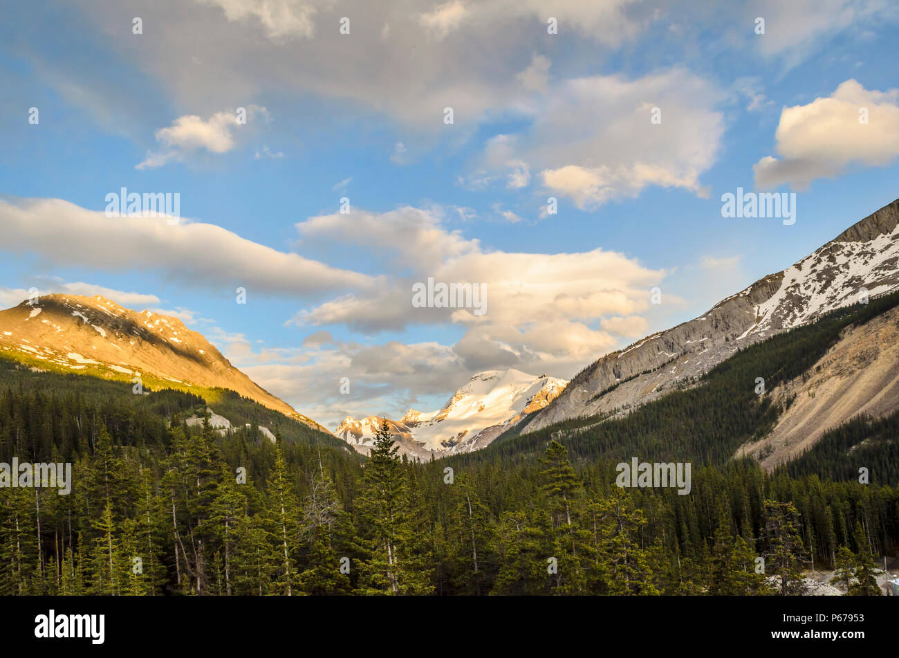 dense coniferous forest, high mountains covered with snow, blue sky and fluffy clouds illuminated by sunlight - Stock Image