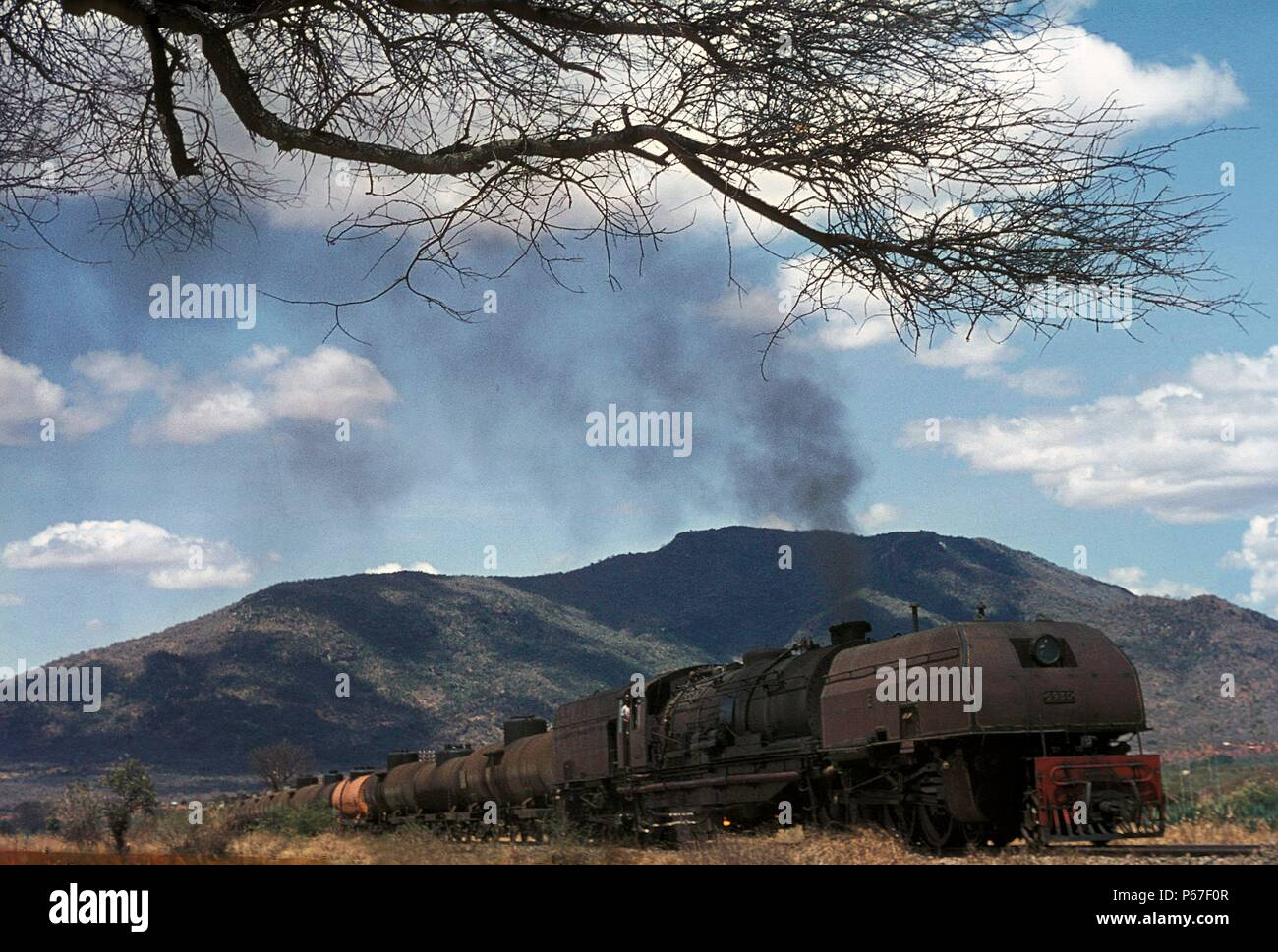 Big game at Voi. These East African Railway's Mountain Class Garratt 2-8-4 + 4-8-2 were one of the world's largest steam types. Built by Beyer Peacock - Stock Image