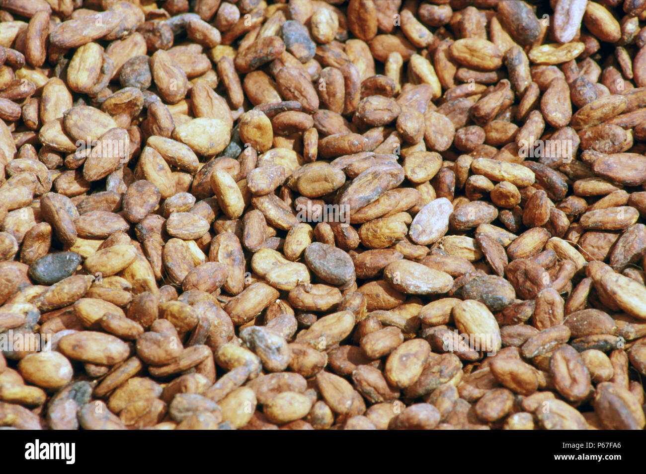 Cocoa Beans at the Cocoa Marketing Wharf at Takoradi Port on Thursday 6 June 1985. - Stock Image