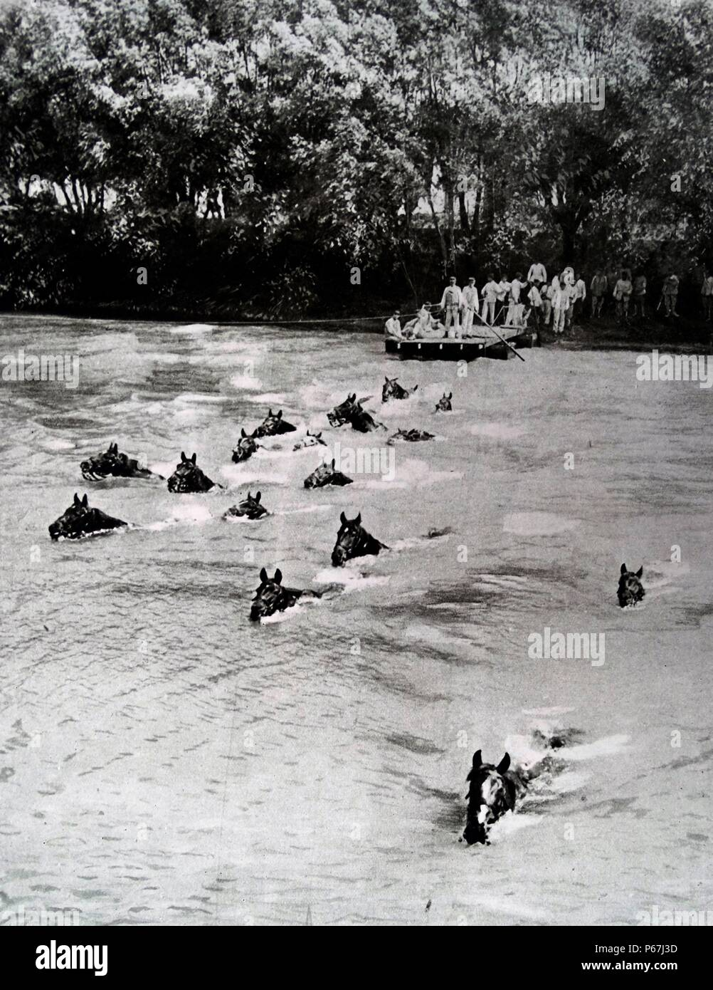 French engineers enable the crossing of military men and horses across a river during world war one - Stock Image