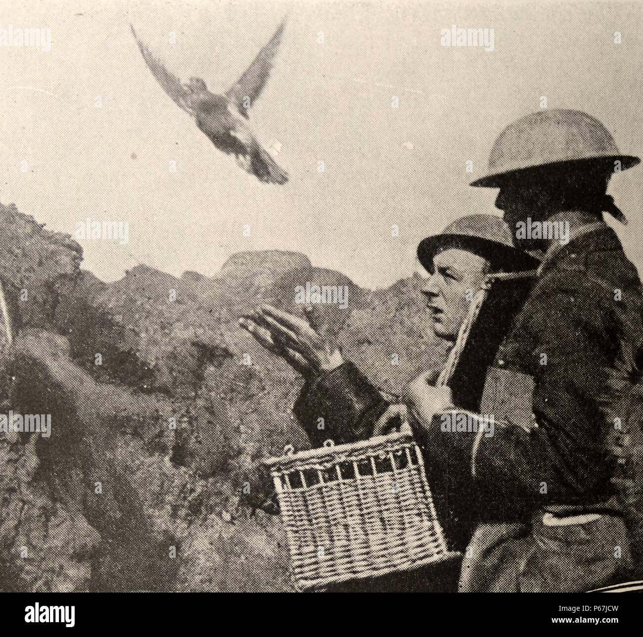 Military Carrier Pigeon Stock Photos & Military Carrier