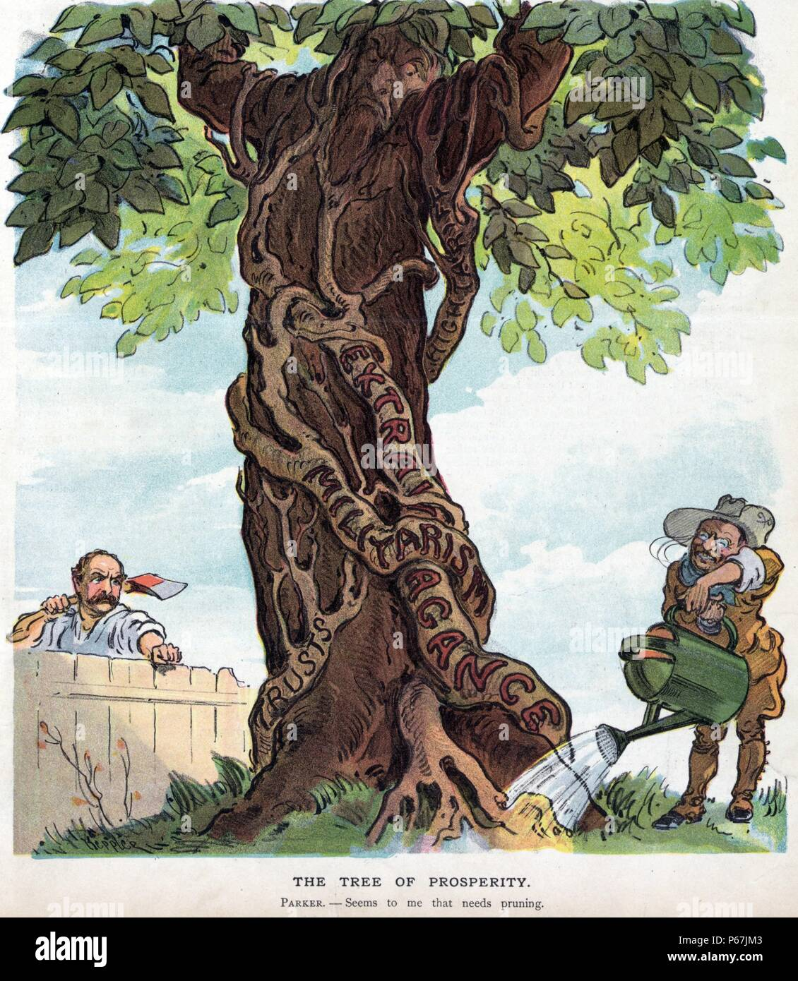 "The tree of prosperity' President Theodore Roosevelt pouring water from a large watering can onto the roots of a vine labelled ""High Tariff, Extravagance, Militarism, [and] Trusts"" growing on a tree that is frowning at Roosevelt. Alton B. Parker, looking over a fence and holding an axe, suggests that the vines need pruning. Stock Photo"