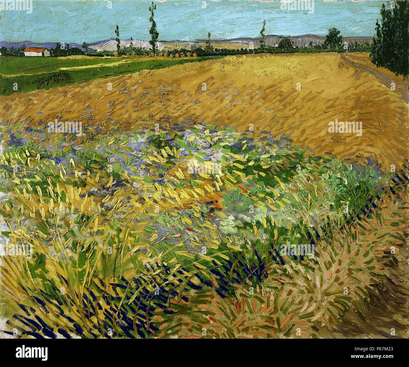 Painting titled 'Wheat Field' by Vincent van Gogh (1853-1890)  post-Impressionist painter of Dutch origin. Dated 1880 - Stock Image