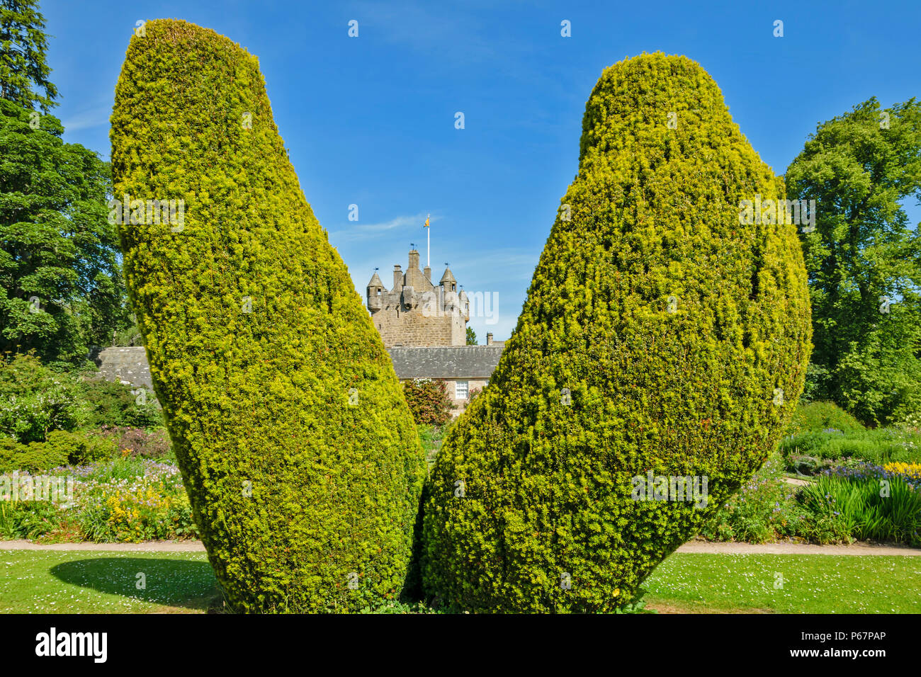 CAWDOR CASTLE NAIRN SCOTLAND TOPIARY SCULPTURE CLIPPED YEW TREES IN THE CASTLE GARDENS - Stock Image