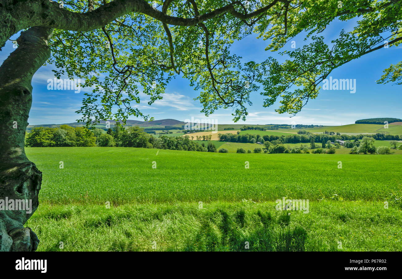 CRAIGIEVAR CASTLE ABERDEENSHIRE SCOTLAND VIEW OF THE COUNTRYSIDE FROM THE CASTLE GROUNDS - Stock Image