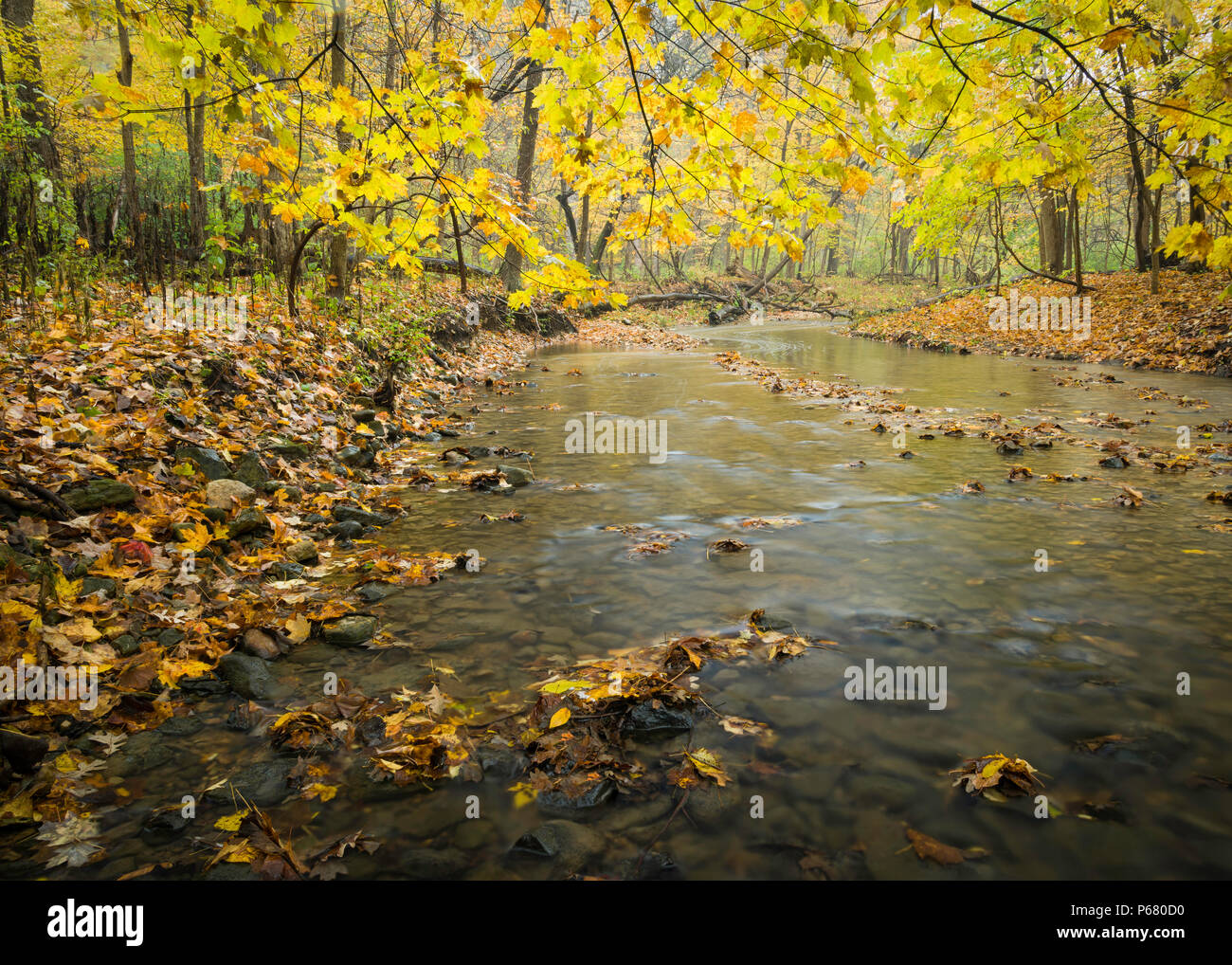 Sawmill Creek flows gently through the autumn landscape at Black