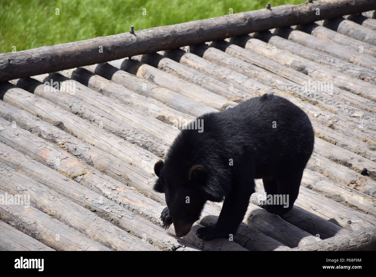 Jiamusi, Jiamusi, China. 27th June, 2018. Jiamusi, CHINA-27th June ...