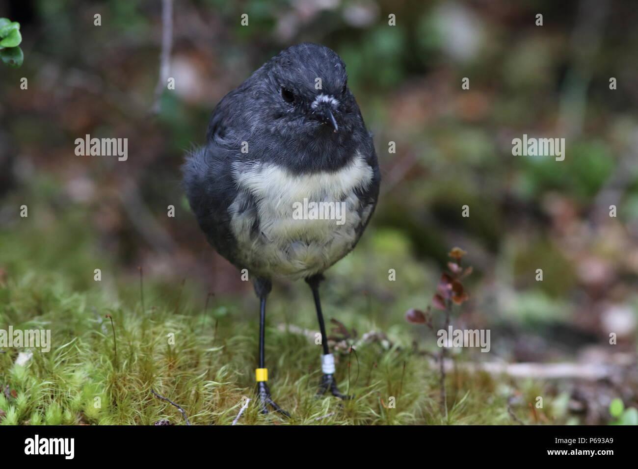Bird Rings Stock Photos & Bird Rings Stock Images - Alamy