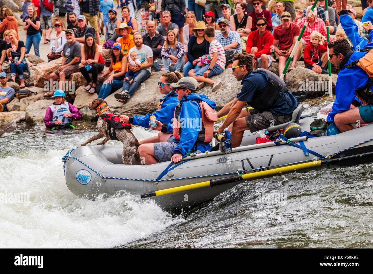 Rafters on Arkansas River, passing through Fibark river festival; Salida; Colorado; USA - Stock Image