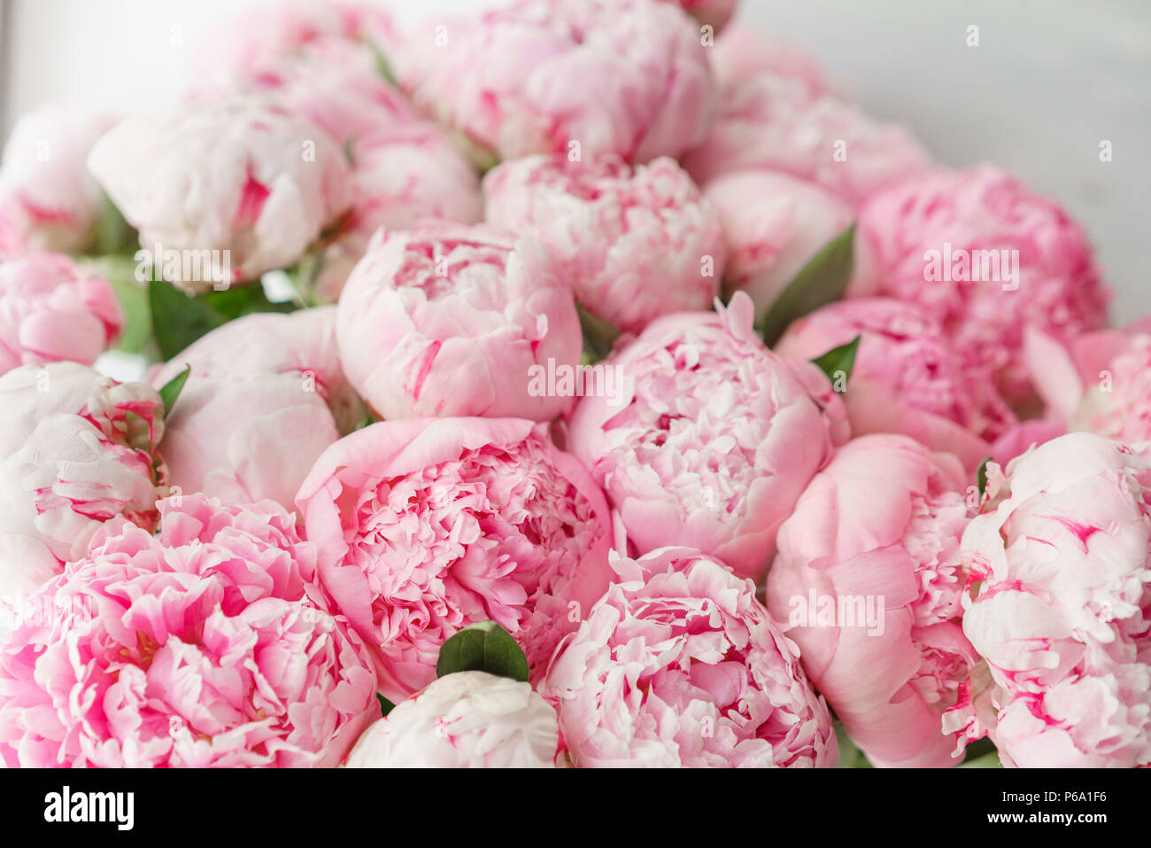 Beautiful Bouquet Of Pink Peonies Floral Composition Daylight