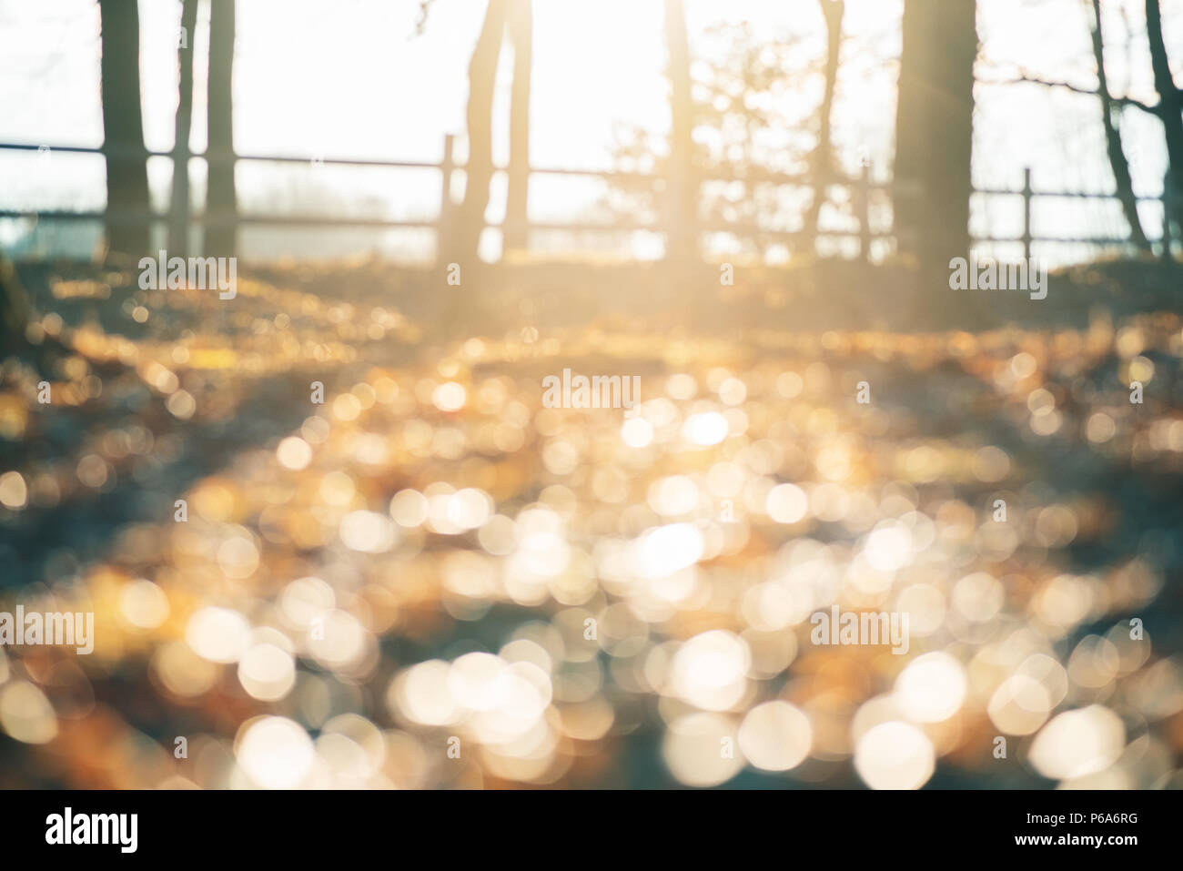Abstract soft and unfocused design background with place for text. Magic forest background with unusual natural effect of sunlifht and glitter bokeh l - Stock Image